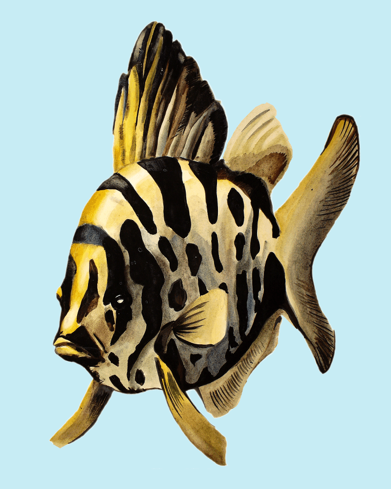 Deyana Deco - YELLOW FISH Poster Preview